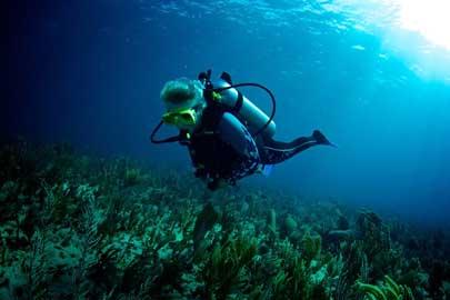 Siesta Key Dive Charters